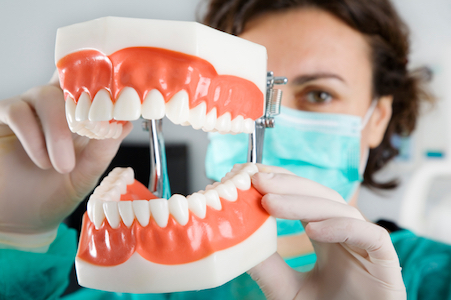 Dental assistant holding a model of a mouth to show how dental services can keep teeth and gums healthy.